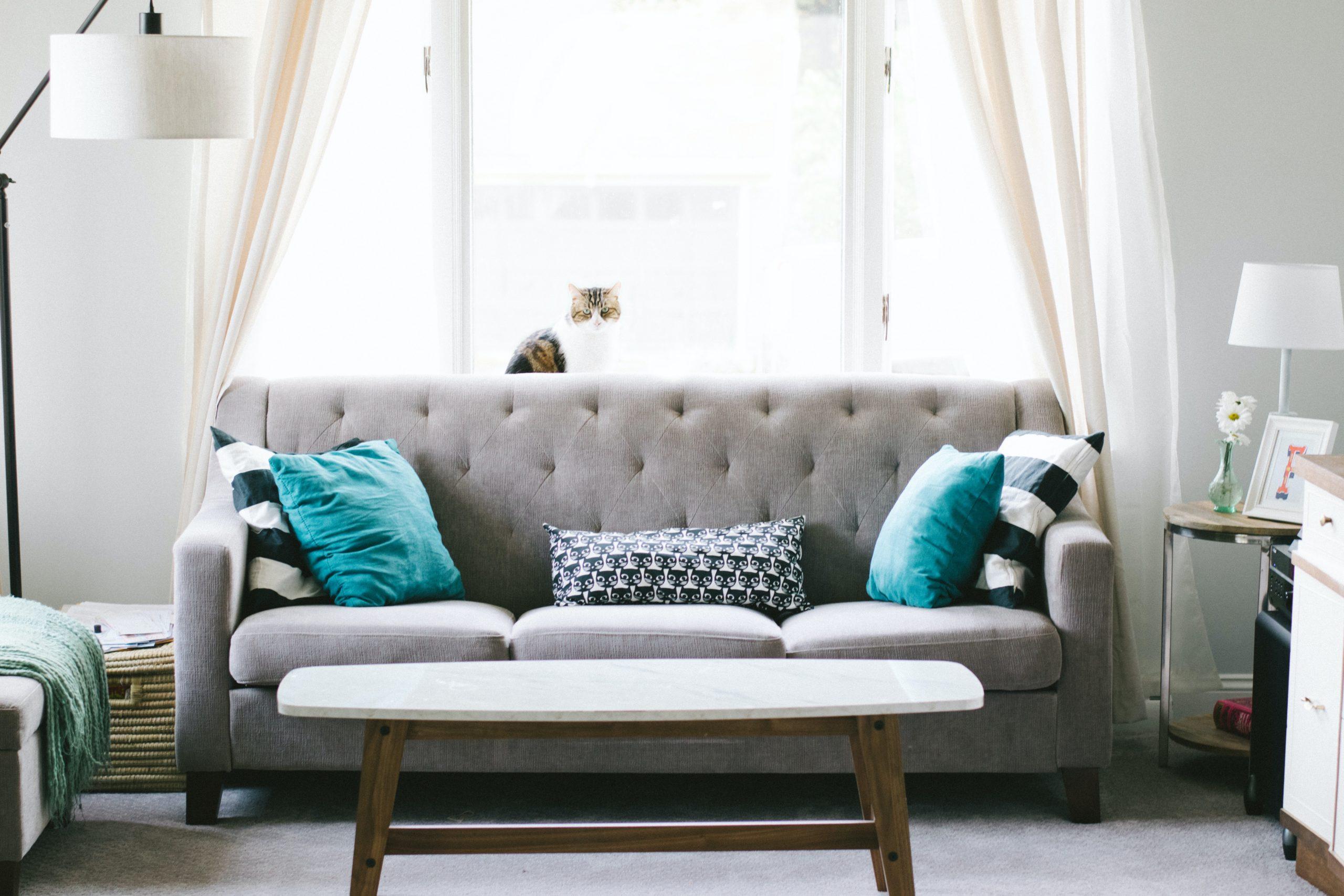 Cómo limpiar el sofá - sofá con cojines y gato